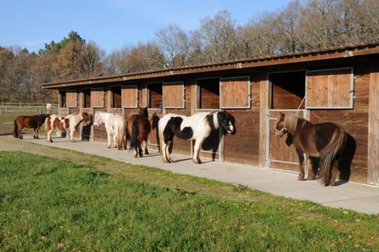 Cavalerie poney de loudjil